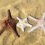 游学2线:澳大利亚海洋奥秘探索生态游学营