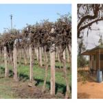 葡萄种植园投资项目