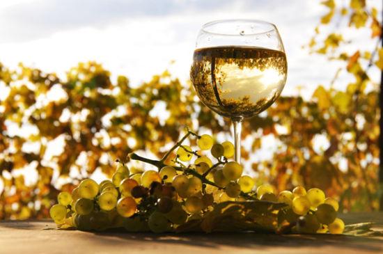溪谷地段精品葡萄酒庄投资项目