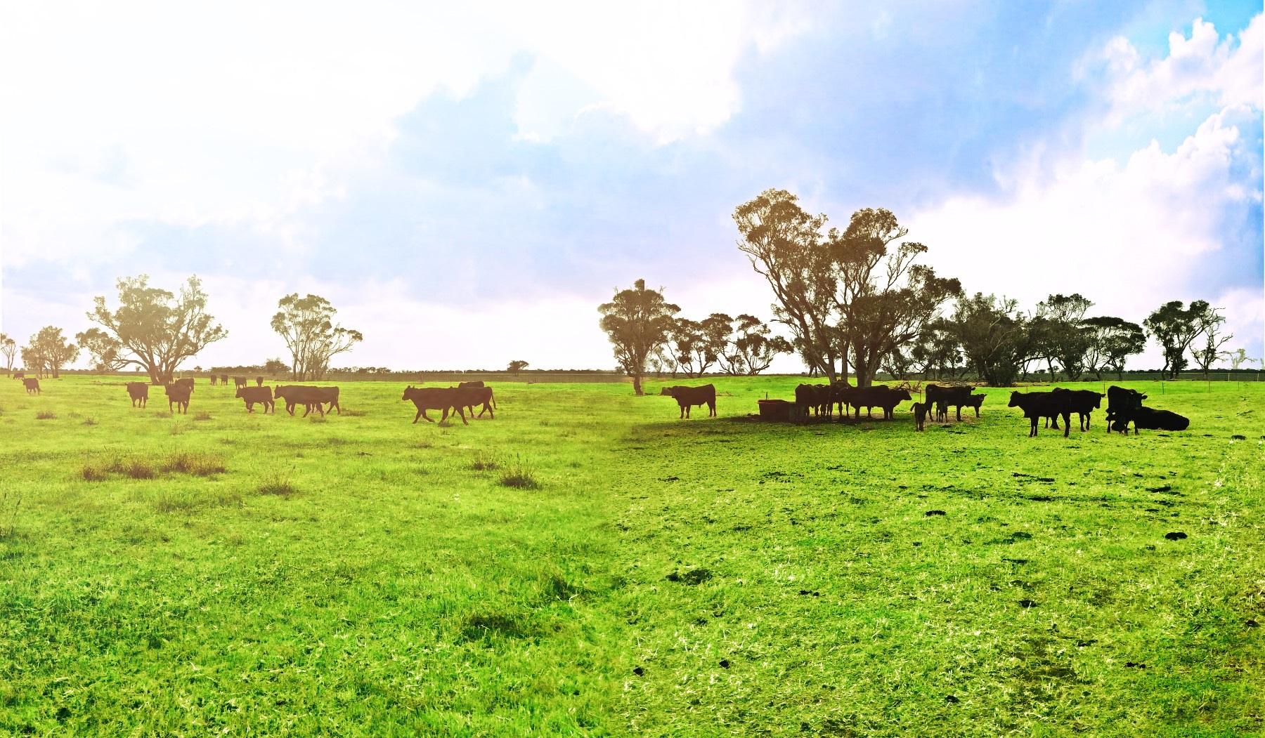 畜牧饲养场投资项目